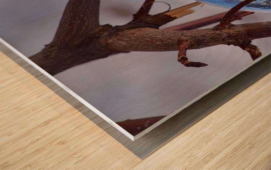 Capturer Impression sur bois