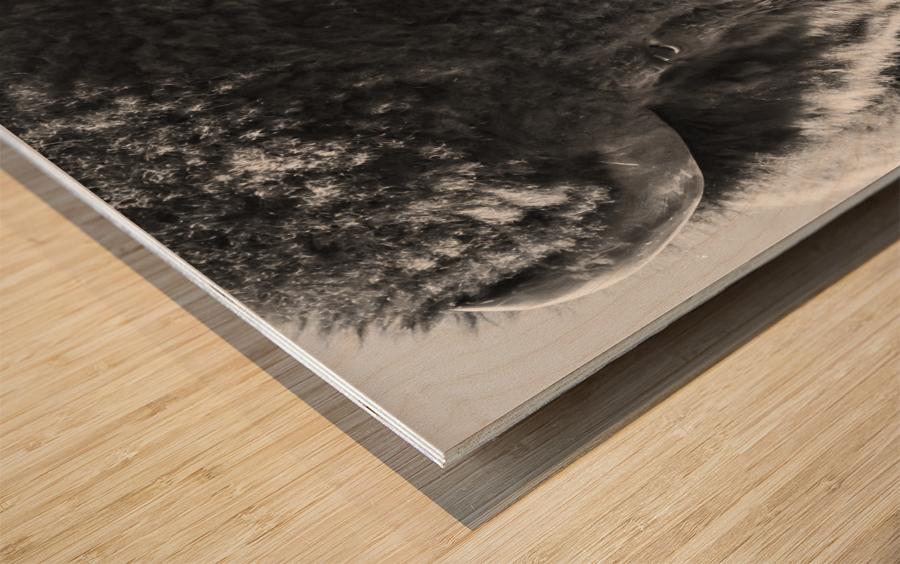 7893 - Buffalo Wood print