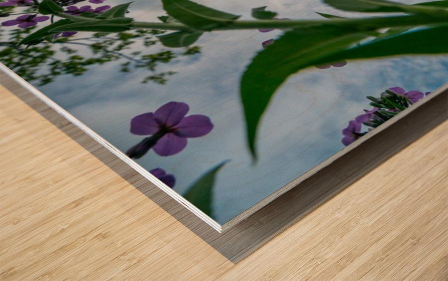 Skyward 2 Wood print