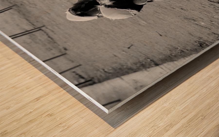 La Sieste Wood print