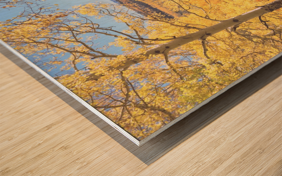 Sunshine Peak through the Aspen Wood print