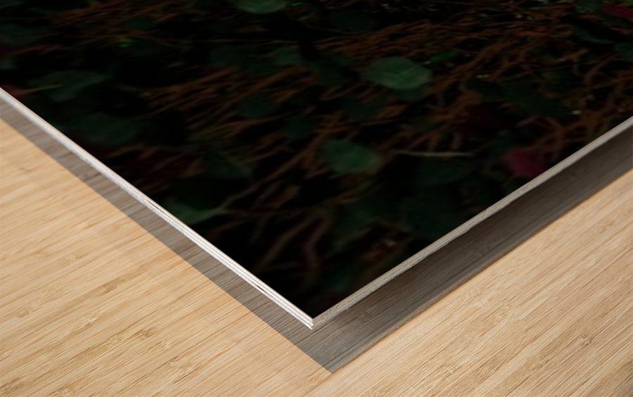 Resting Fae Wood print