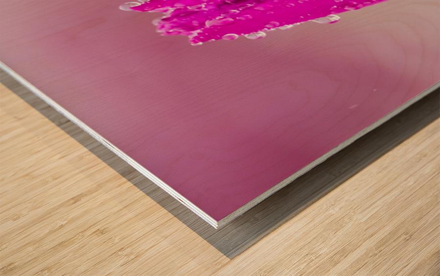 Pink Tulip II Wood print