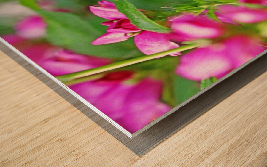 The Lure Of The Pink Turtlehead Wood print
