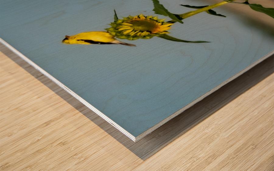 Sunflower Perch Wood print