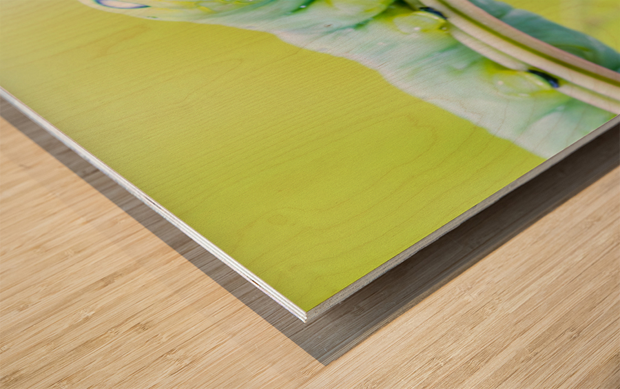 an Daphnis Nerii Wood print