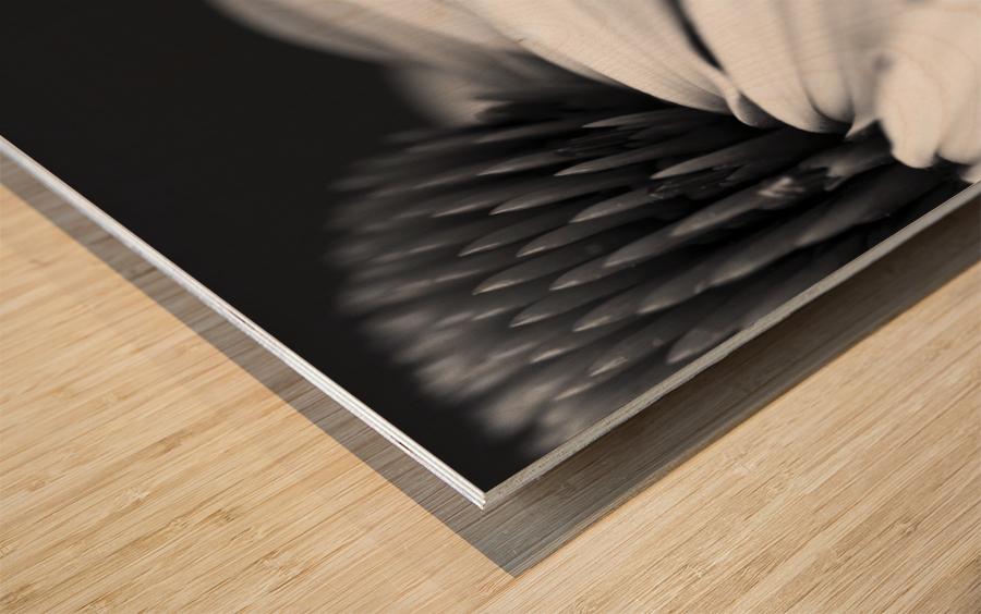 Coneflower close-up Wood print