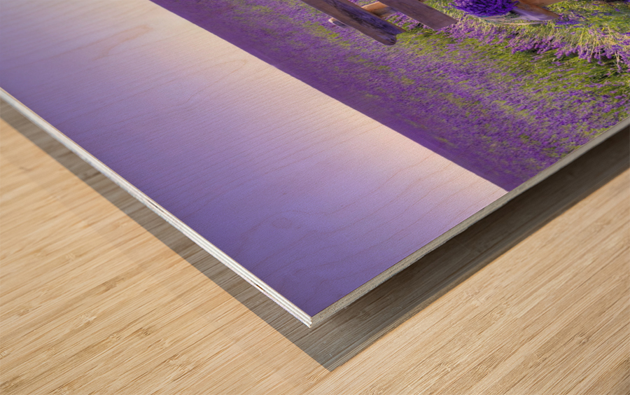 Bench in Lavender field Wood print