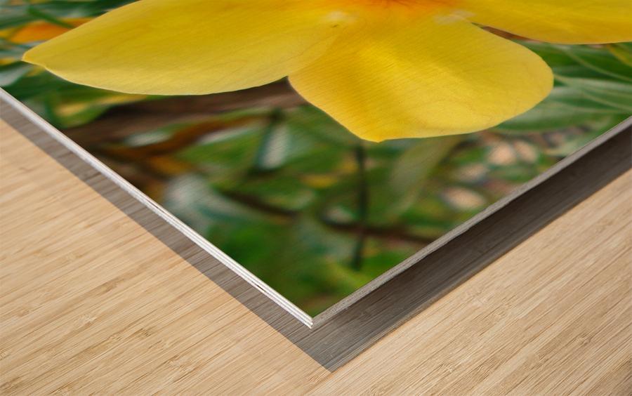 Perfect Wood print
