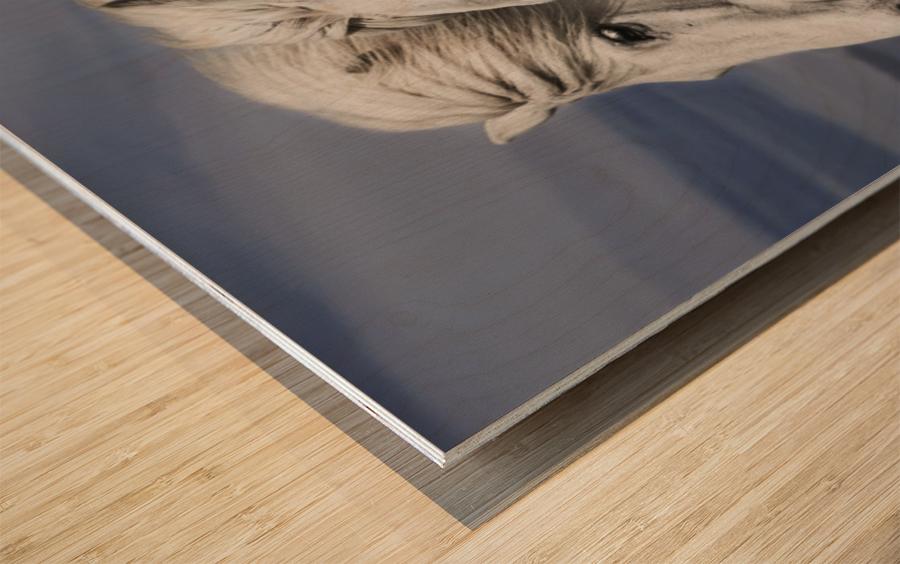 Blowing by Bragi Ingibergsson Wood print