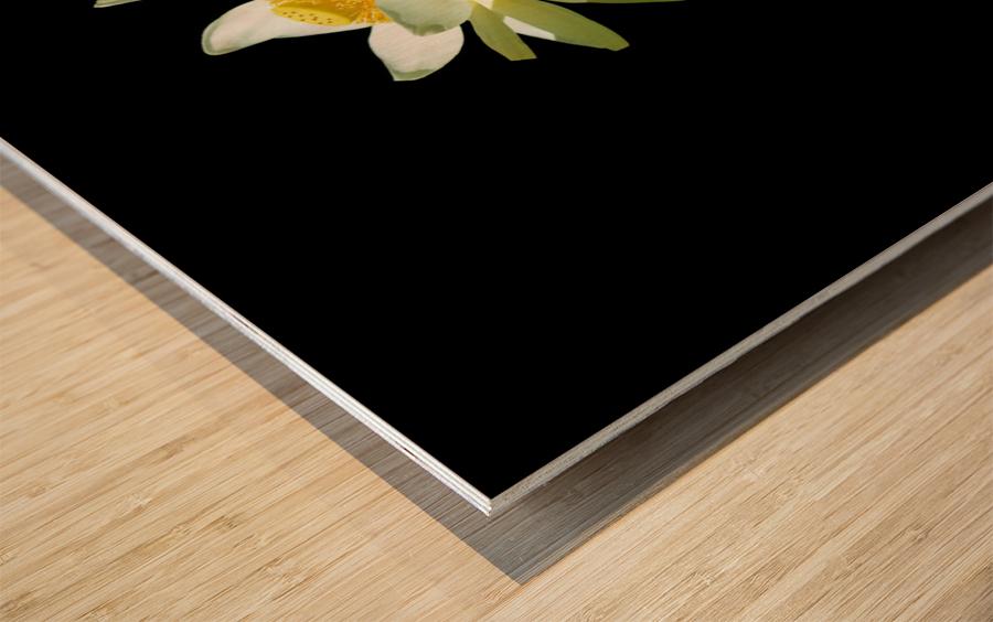 Lotus 1 Wood print