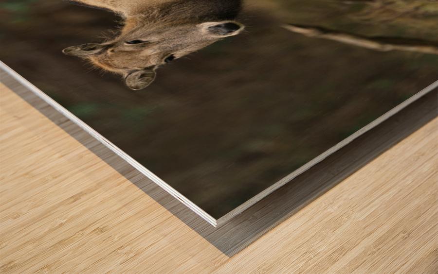 Reindeer Wood print