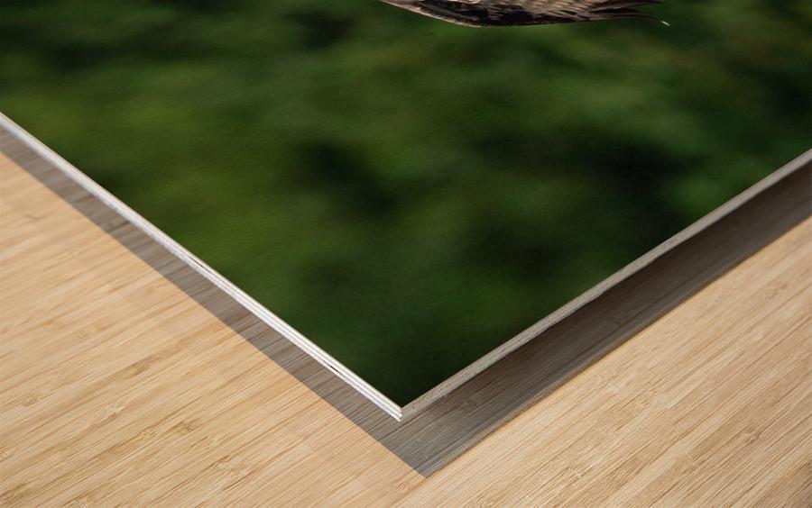 Wesley Allen Shaw 00460 Wood print