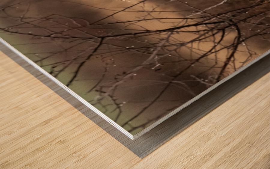 Wesley Allen Shaw 02117 Wood print