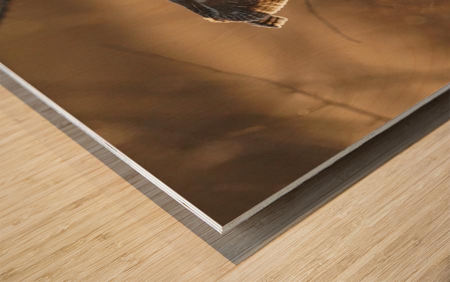 Wesley Allen Shaw 08859 Wood print
