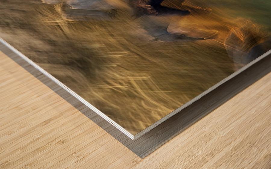 fiery gallop by milan malovrh  Wood print