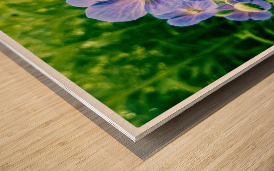 Periwinkle Wood print