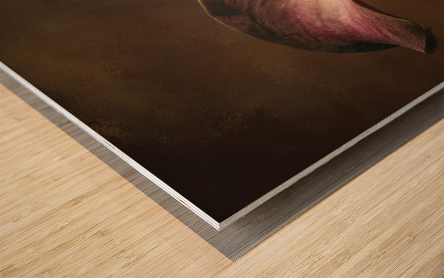 Etude Zen 8 e Wood print