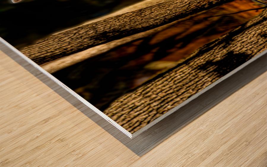 Fallow Deer 3 Wood print