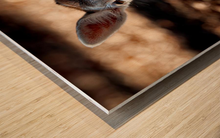 Fallow Deer 1 Wood print