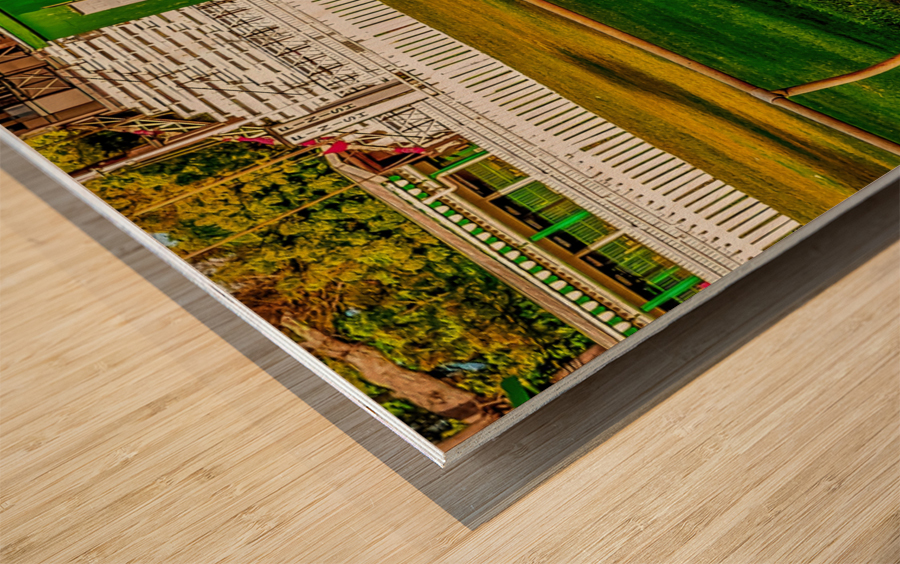 Racehorse02 Wood print
