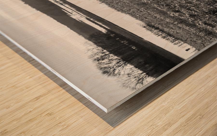 Cattails at Dawn Wood print