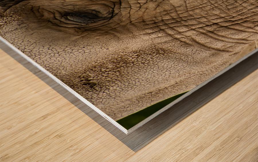Wrinkles  Elephant  Wood print