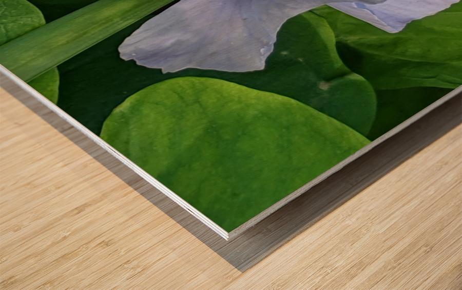 Refreshing Nature Wood print
