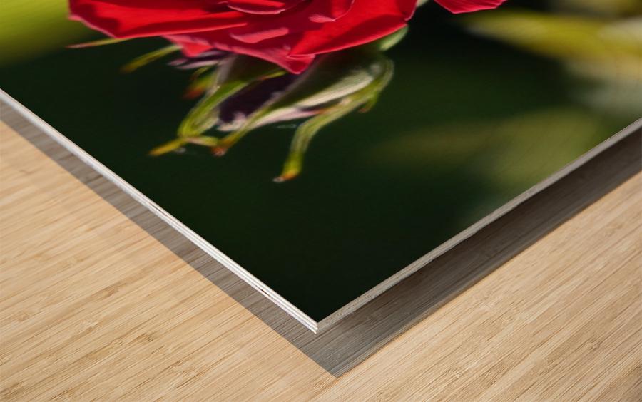 Sterling Wood print