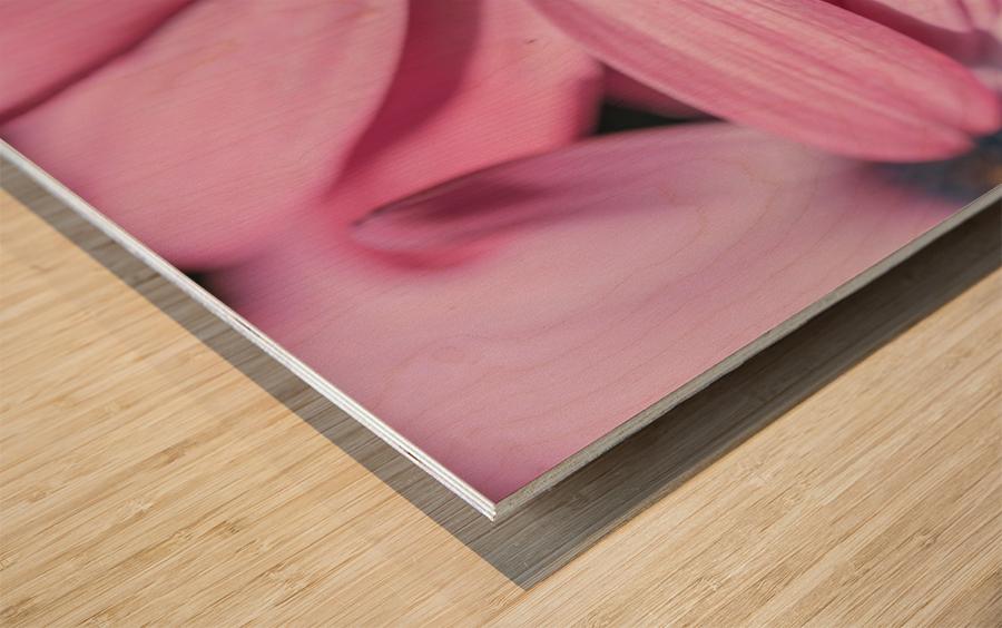 Gerbera flower background Wood print