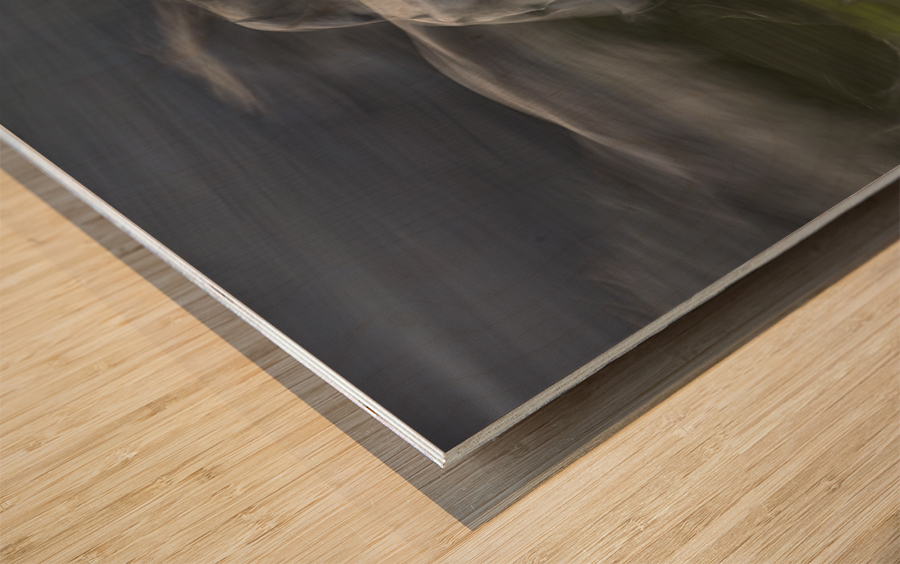 Stampedo Wood print