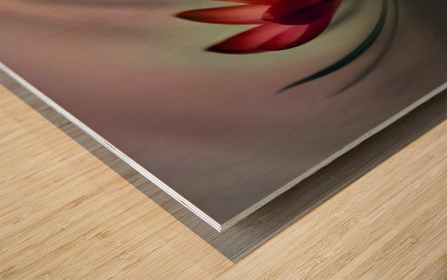 Krokus Wood print