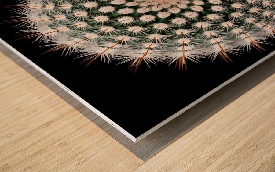 Notocactus scopa Wood print