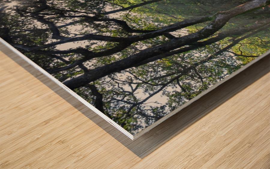 Dewerstone Woods Wood print