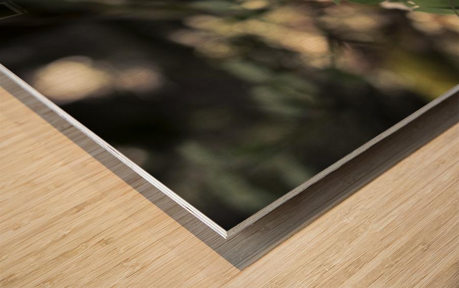 bokeh Wood print