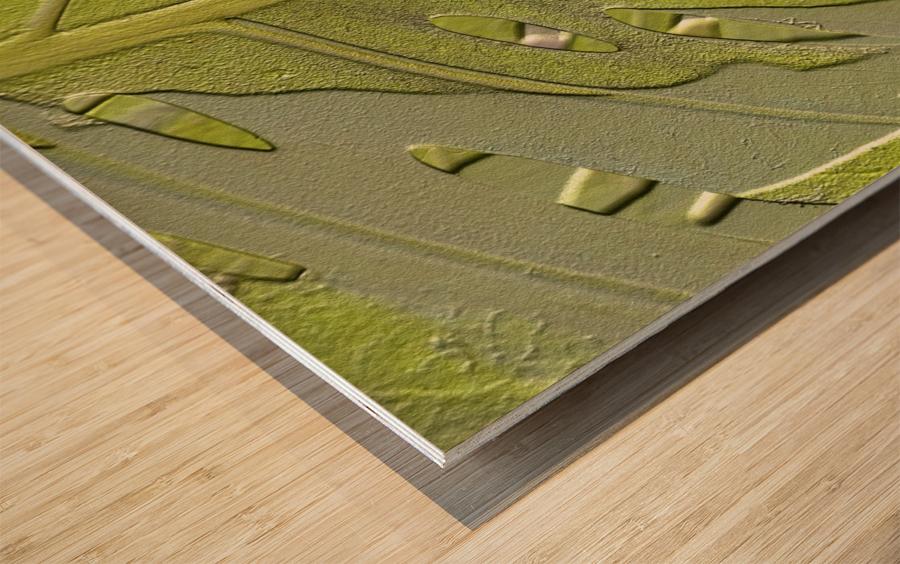 Leaf Texture Background Wood print