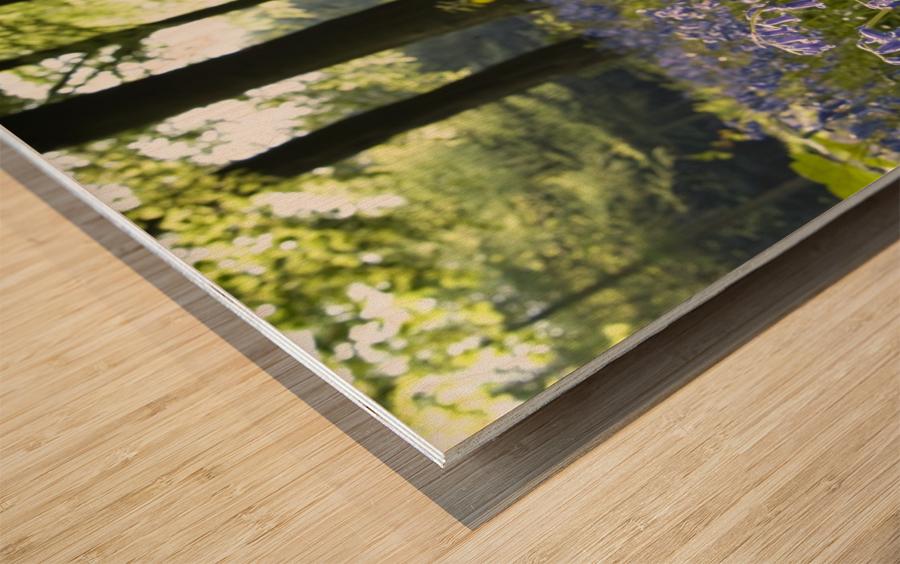 Bluebells On Forest Floor Wood print