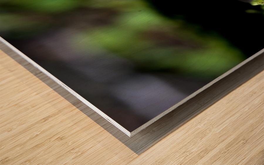 Closeup Of Mushroom Wood print
