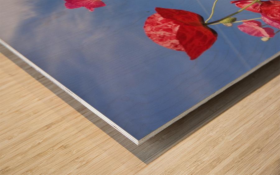 Red Flowers Against Blue Sky Wood print