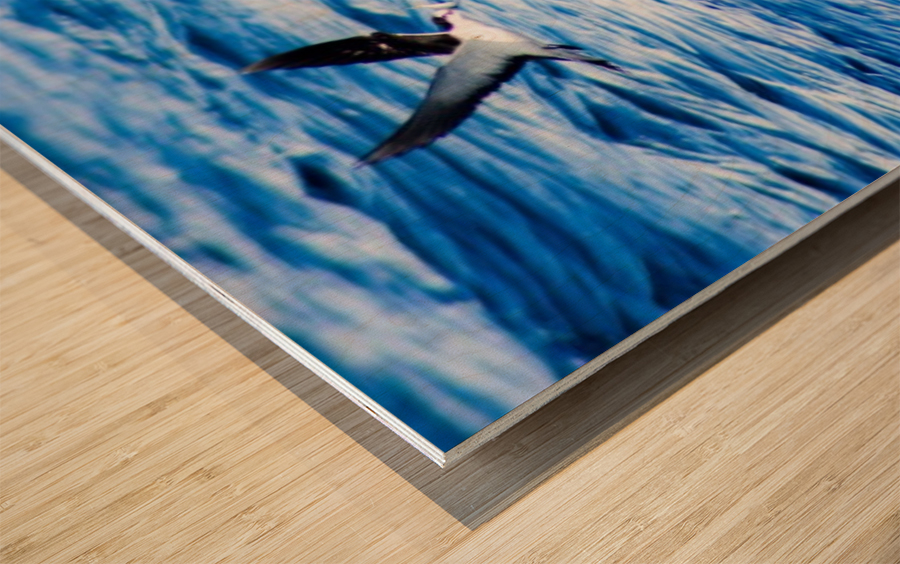 Tern Impression sur bois