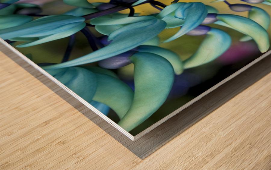 Blue jade plant; Hawaii, United States of America Wood print