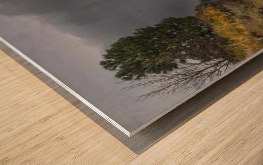 Desert Flyer Wood print