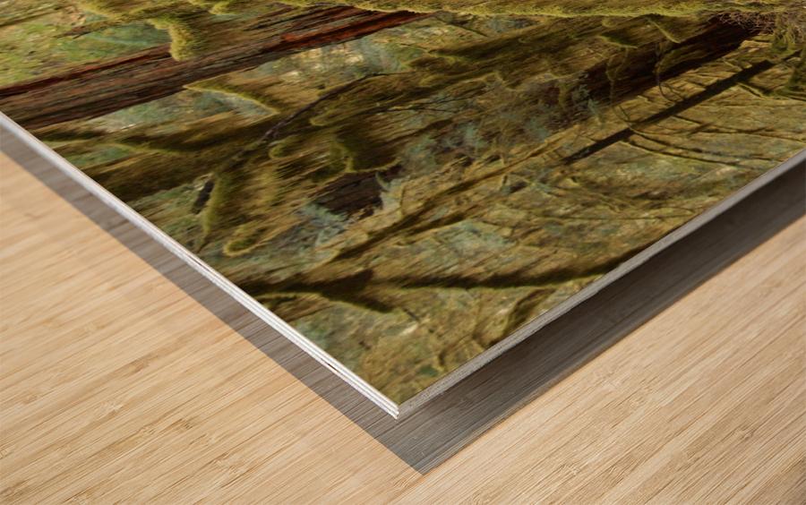 Moss covered tree in the Opal Creek Wilderness, Oregon Wood print