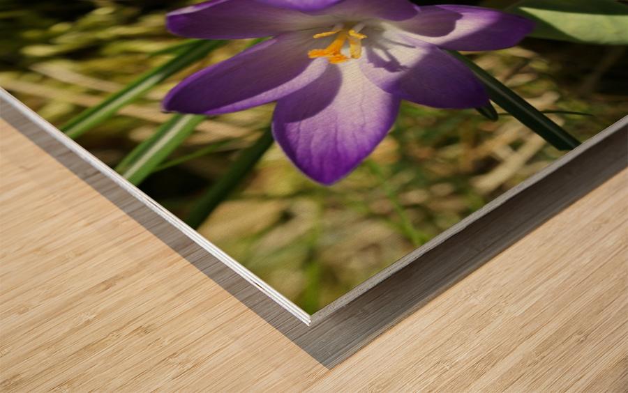 DSC06574 Wood print