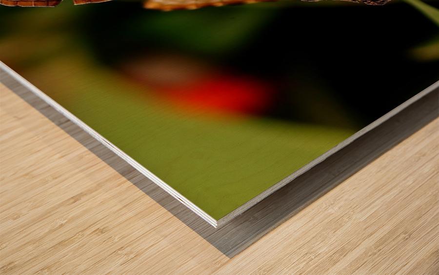 Morph Wood print