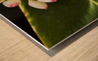 Close-up of white ginger flower Alpinia; Maui, Hawaii, United States of America Wood print