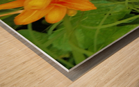 Oranger Lilly 2 Wood print