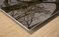Looking Through Wood print