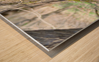 DSC_0223 Wood print