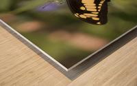 King swallowtail butterfly Wood print